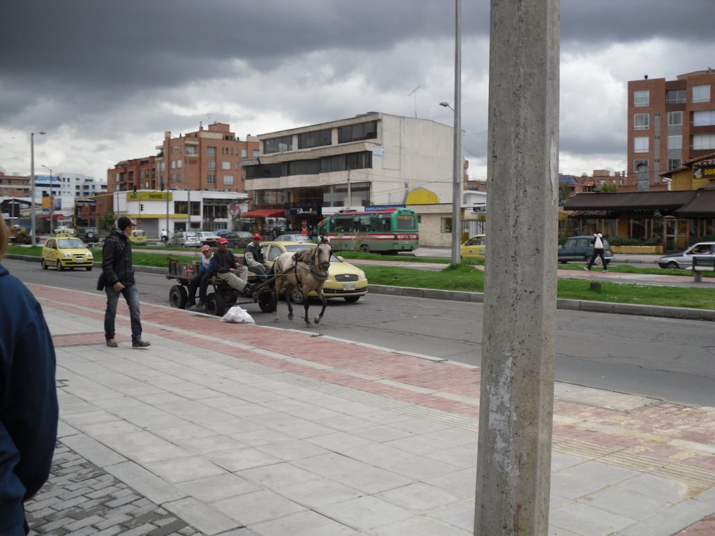 Horse in the Street