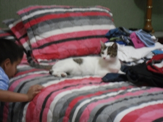 The Cat in Our Room