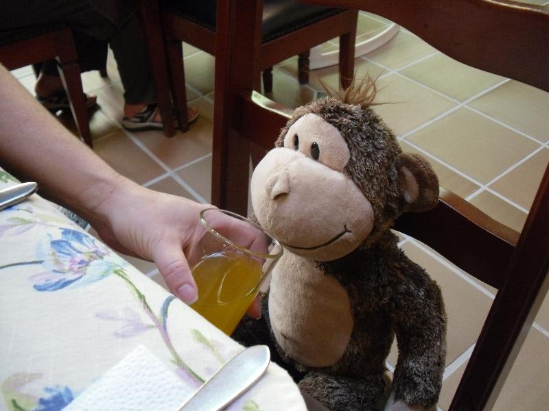 Monkey at Breakfast